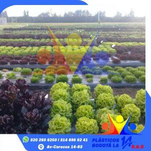 Plástico para la Agricultura
